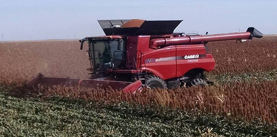 Red Case IH combine with ARRO® in milo field.